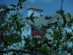 Romanian Spring