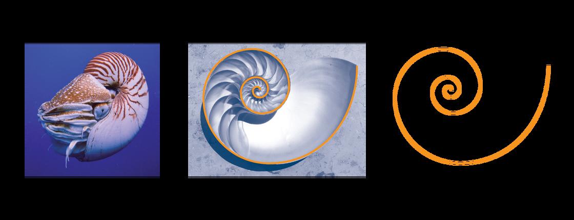 Sci High Nautilus Golden Ratio