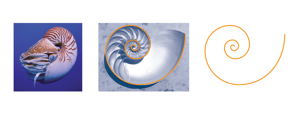 Sci High Nautilus Golden Ratio